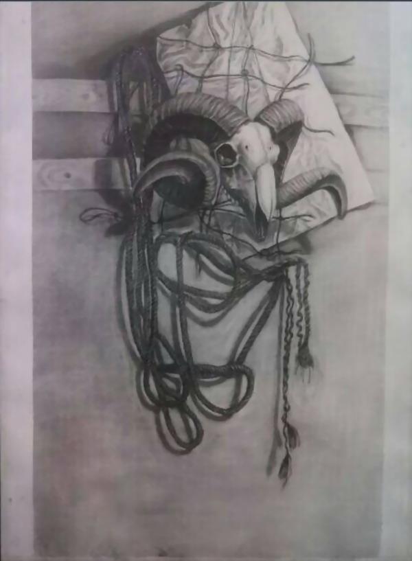 《羊头静物写生》素描静物-马科作品